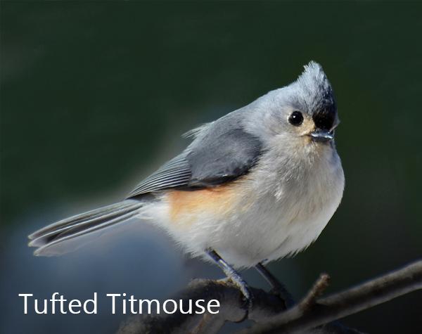 Christmas Bird.Christmas Bird Count Detroit Audubon