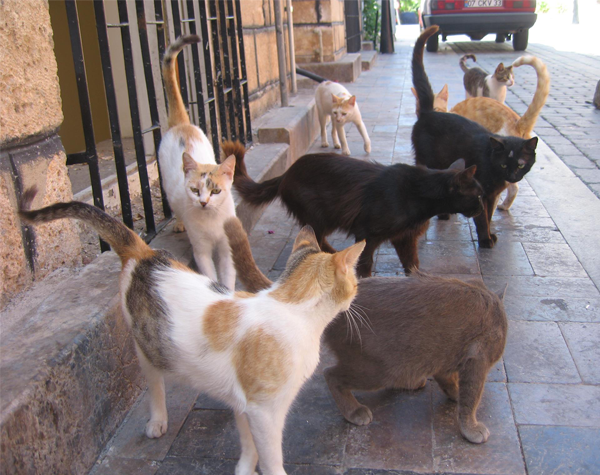 Feral Cats 600x475